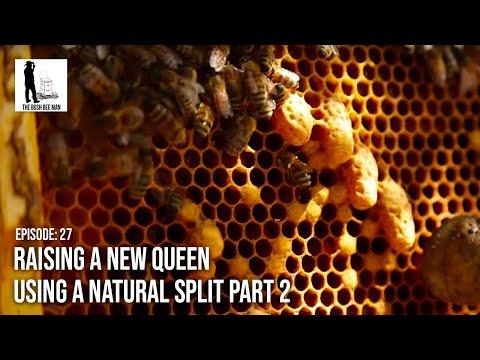 Making a New Queen using a Natural Split Part 2  - Episode 27:
