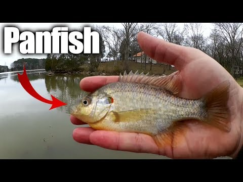 Float Fishing For Bluegill and Sunfish - Open Water Winter Panfish