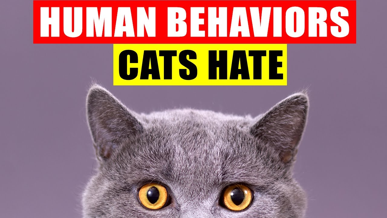 18 Human Behaviors Cats Hate and Wish You Wouldn't Do