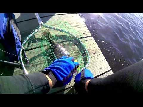 End of Summer Back Bay Fluke Fishing - Long Island NY
