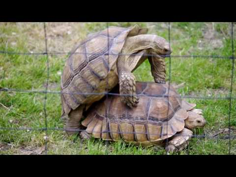Xxx Mp4 Turtles Having Sex In Madrid Zoo 3gp Sex