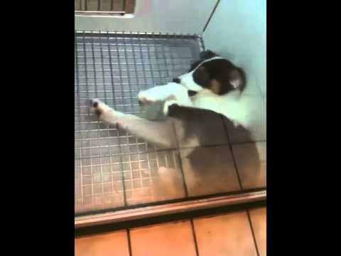 Stupid dog biting himself