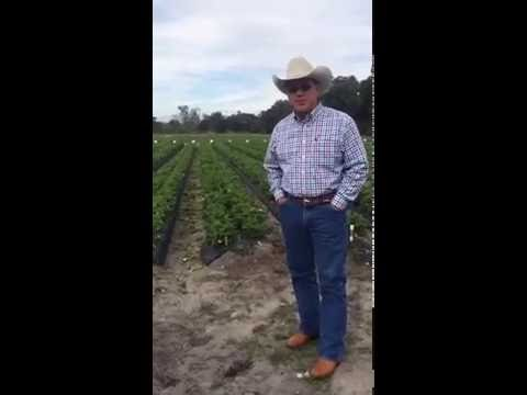 On the Farm with Florida Strawberries - Part 3
