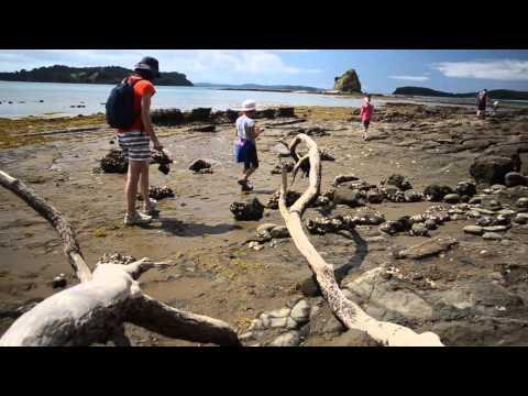 A walk to Pudding Island, Mahurangi Regional Park, auckland, New Zealand