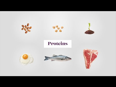 Plant & Animal Proteins - the Building Blocks of the Body
