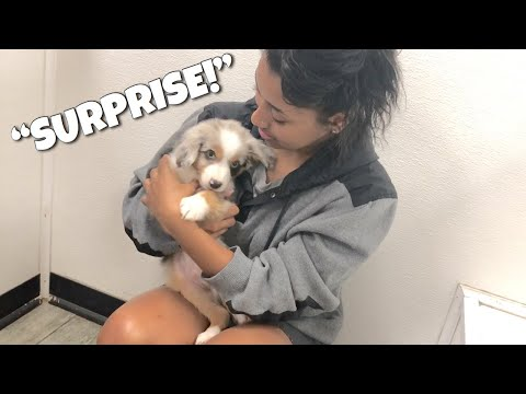 SURPRISING MY GIRLFRIEND WITH A NEW $3500 DOG!! Ft. Bri Chief