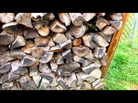 How to Kill Ants for Good in your Firewood