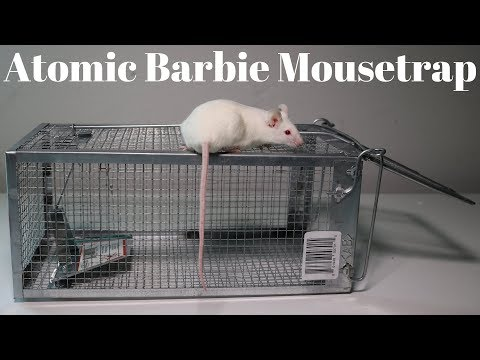 Atomic Barbie Trap Catching Mice & Squirrels. Monkey Trap Monday