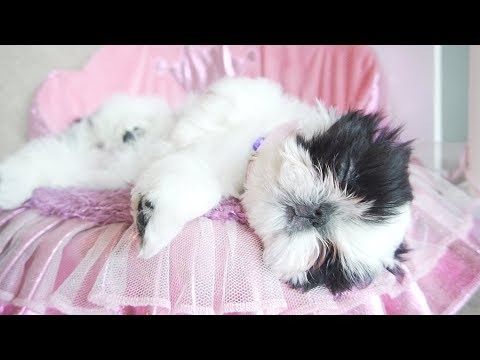 ULTIMATE SLEEPY PUPPY | SUPER CUTE