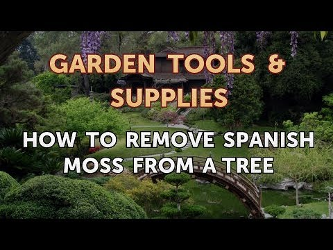 How to Remove Spanish Moss From a Tree