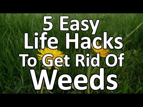 5 Easy Life Hacks for Getting Rid of Weeds!