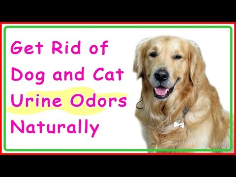 Get Rid of Dog and Cat Urine Odors Naturally