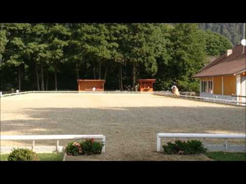 Our first FEI dressage test