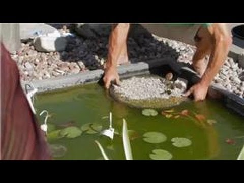 Care of Lilies : Planting Instructions for Water Lily Pond Plants