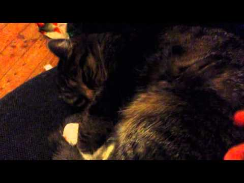Waking my cat up from a dream
