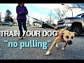 Train Your Dog to NOT PULL on Walks - Loose Leash Walking