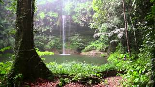 Rain Sound and Rainforest Animals Sound - Relaxing Sleep
