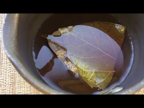 How to make avocado leaves tea and benefits