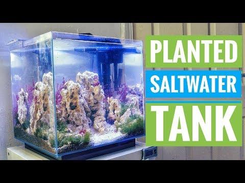 Planted Saltwater Tank Update 1