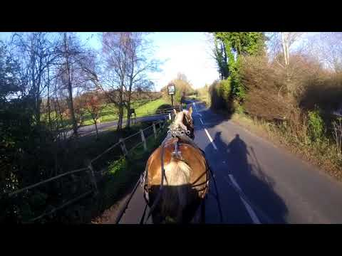 Gina in carriage driving training - Barry Hook, Horse Drawn Promotions