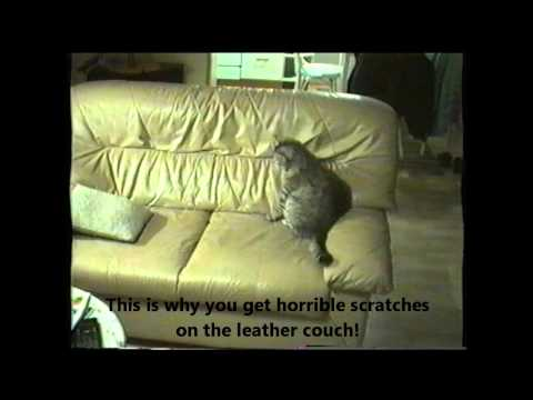 Cat playing on the leather couch