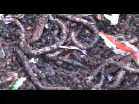 How To Make A Worm Bed Cheap