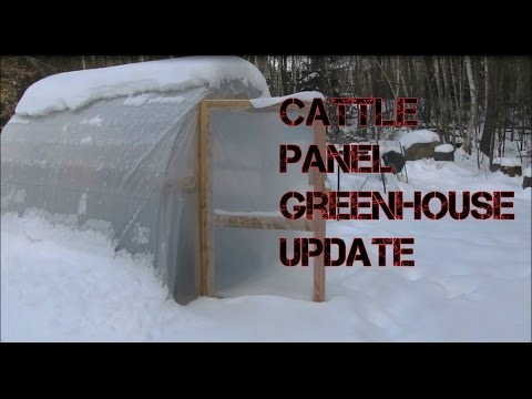 Cattle Panel Greenhouse Update