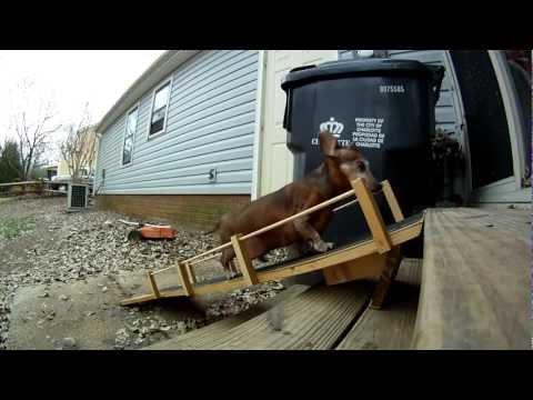 Doggie Handicap Ramp!
