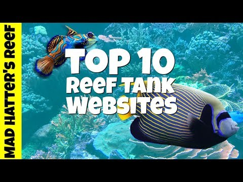 Top 10 Reef Tank Websites