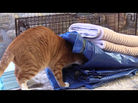 How To Trap Feral Cats - TNR - #FeralCatDay