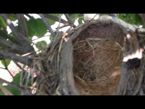 Bye, Baby Robins! (Day Fifteen)