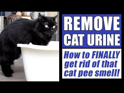 How To Remove Cat Urine Smell FINALLY!