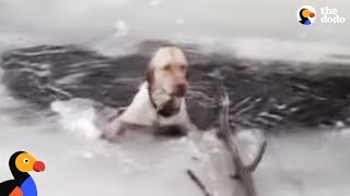 Dog Stuck In Icy Lake Cries To Rescuers For Help | The Dodo
