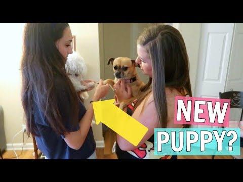 Puppy Playdate! Bella Makes a New Friend!!