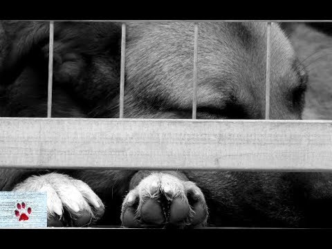 Until all cages are empty