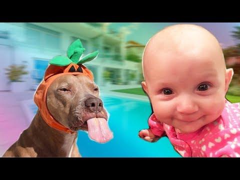 Собаки и дети, лучшие друзья | Часть 5 | Dogs and Baby, the best video