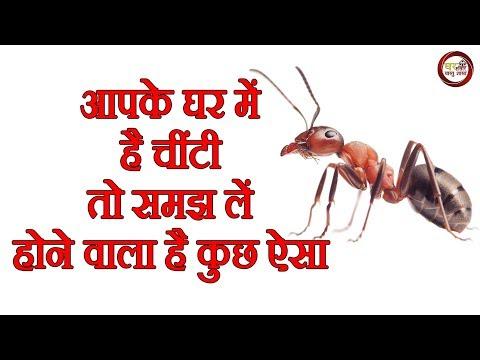 ✅आपके घर में है चींटी, तो समझ ले होने वाला है कुछ ऐसा....