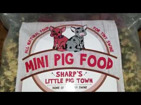 What we feed our mini pig