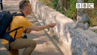 Why are these monkeys stealing from tourists? - World