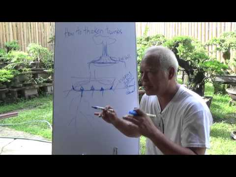 Bonsai Tutorials for Beginners: How to Thicken Trunks