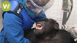Misshandelte Affen werden gerettet  - Ein neues Leben erwartet sie in Spanien