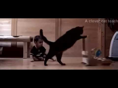 A clever cat teach a baby to walk