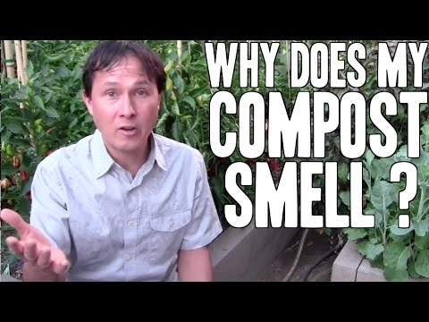 Why Does My Compost Smell ? & more Gardening Questions Answered