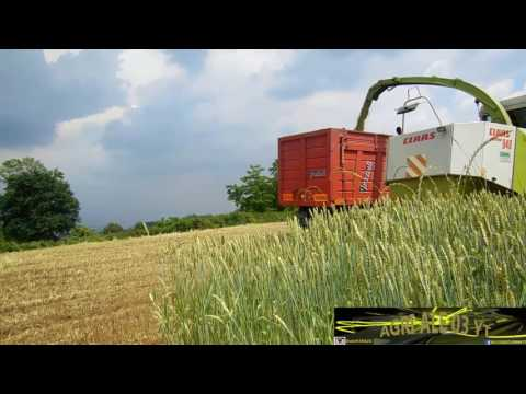 triticale silage 2016|claas jaguar 840+bodini direct 5mt|new holland t7 210x2+graziolix2