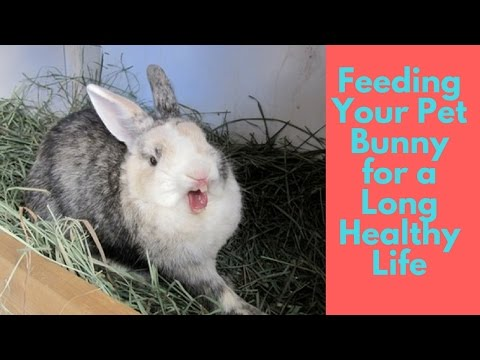 Feeding Your Pet Bunny for a Long Healthy Life