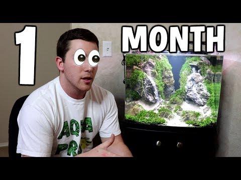 1 Month Update: SAND WATERFALL AQUARIUM
