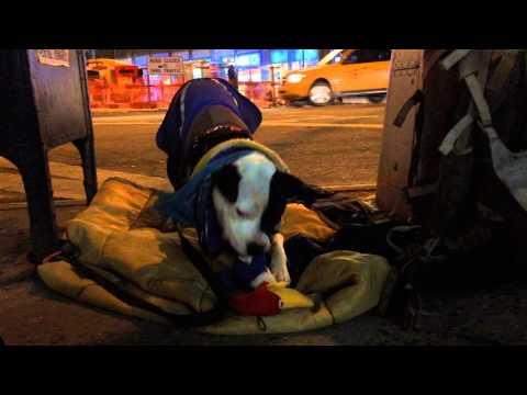 Tonight on freezing NYC streets  - Athena the pitbull