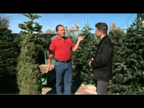 How To Keep Your Live Christmas Tree Fresh Longer