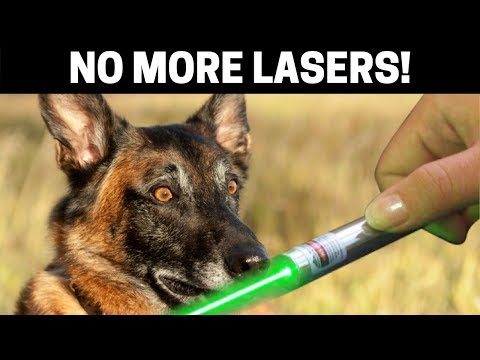 Dog Behavior And Laser Pointers Explained! Why Does My Dog Chase The Light?