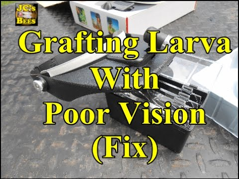 Grafting Larva With Poor Vision (Fix)